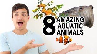 8 Amazing Aquatic Animals!