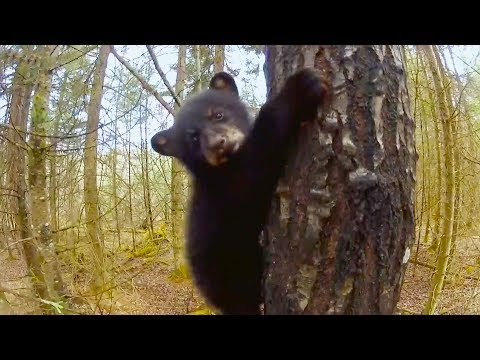 Top 5 Funniest Animal Outtakes | BBC Earth