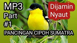 Gambar cover Pancingan cipoh SUMATRA sirtu cipeuw cipow sirdung mp3