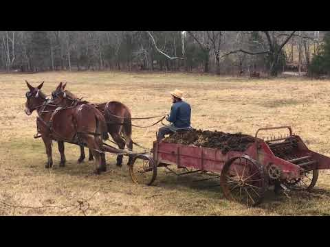 Draft mule team for sale. Check this out. Standing video. Must see ‼️‼️‼️‼️‼️‼️👍👍👍👍👍😉😉😉👍👍