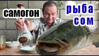 Пью ЯДрЁный САМОГОН, а на ЗАКУСЬ рыба СОМ...