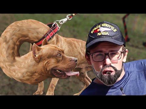 WHY MEN REFUSE TO NEUTER THEIR DOGS - idubbbz complains