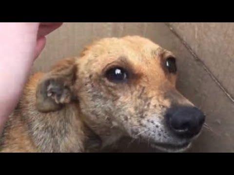 Заглянув в коробку,которая была на обочине, люди увидели испуганную собаку и больных щенков…