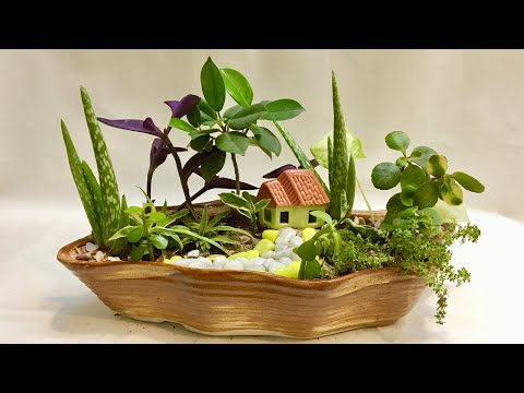 Cute Fairy Garden, DIY Fun Gardening Ideas With Indoor Plants For Beginners Step By Step, India