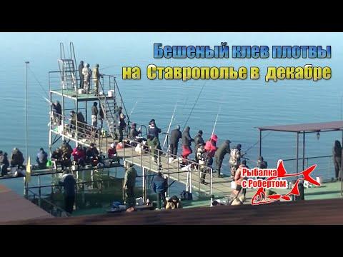 Бешеный клев плотвы в конце декабря на Новотроицком водохранилище