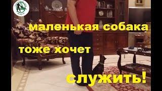 Дрессировка собак. Новосибирск. Кинологический центр Барс. Пинчер послушание