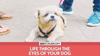 FilterCopy | Life Through The Eyes Of Your Dog | Ft. Rohan Khurana