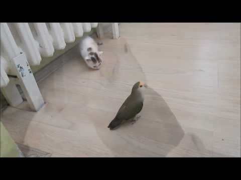 Adorable meeting between kitten and parrot