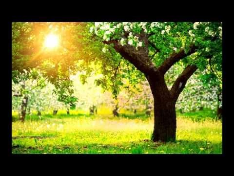 Vivaldi - Spring, 1st Movement: Allegro