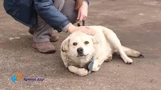 В добрые руки шикарная собака Марта!