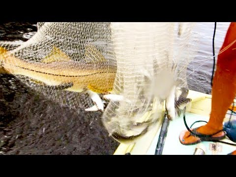 ACCIDENTAL CATCH! Caught a Big Snook in My Cast Net!