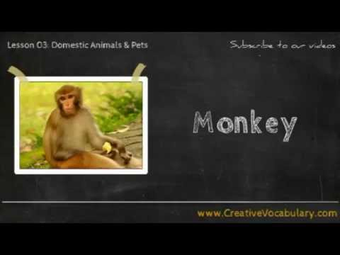 Domestic Animals & Pets Vocabulary Picture Video Lesson -  Learn List of Domestic Animals & Pets - 1