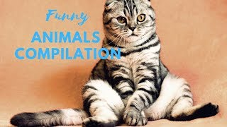 Funny animals compilation - try not to laugh - part 1