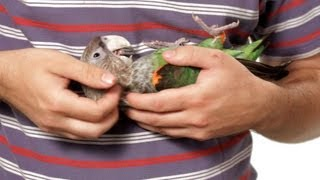 How to Hold a Parrot | Parrot Training