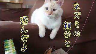猫とネズミの親分の関係とは?!