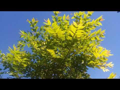Paradise Valley Arizona start of food forest!