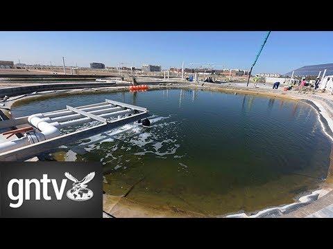 Biofuel produced in Abu Dhabi desert fuels flights