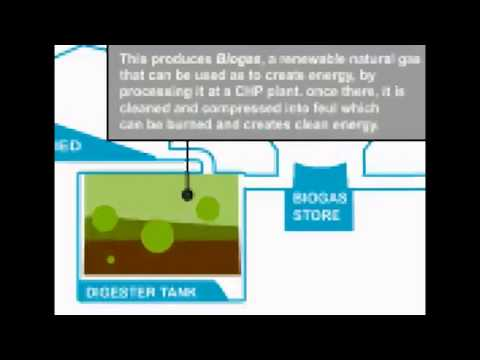 Global Renewable