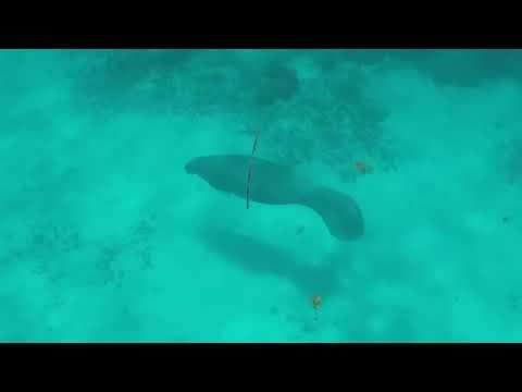 Belize Vlog