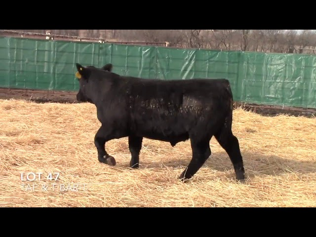 Taliaferro Angus \u0026 T Bar T Angus Ranch - 9