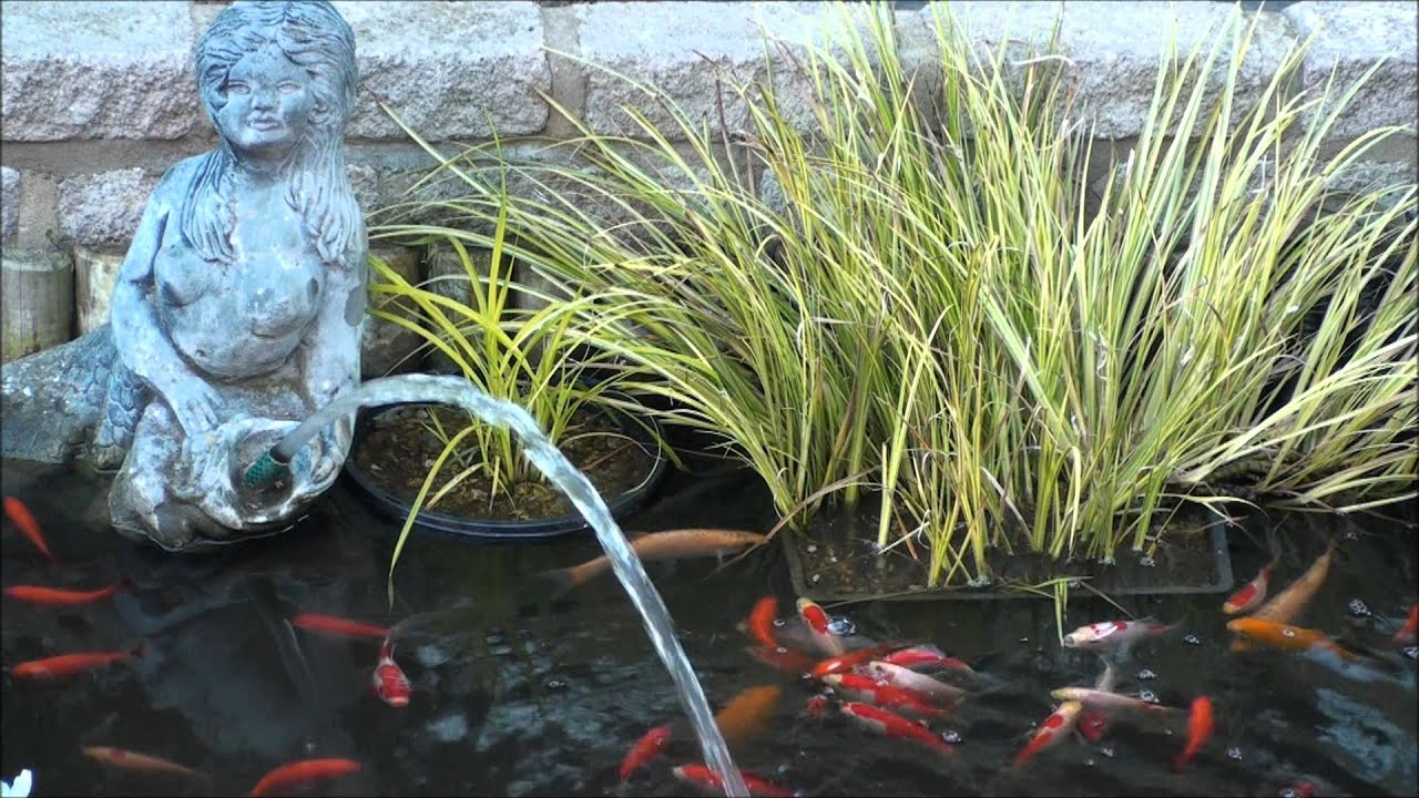 Small fish pond in back garden capel le ferne youtube for Popular pond fish