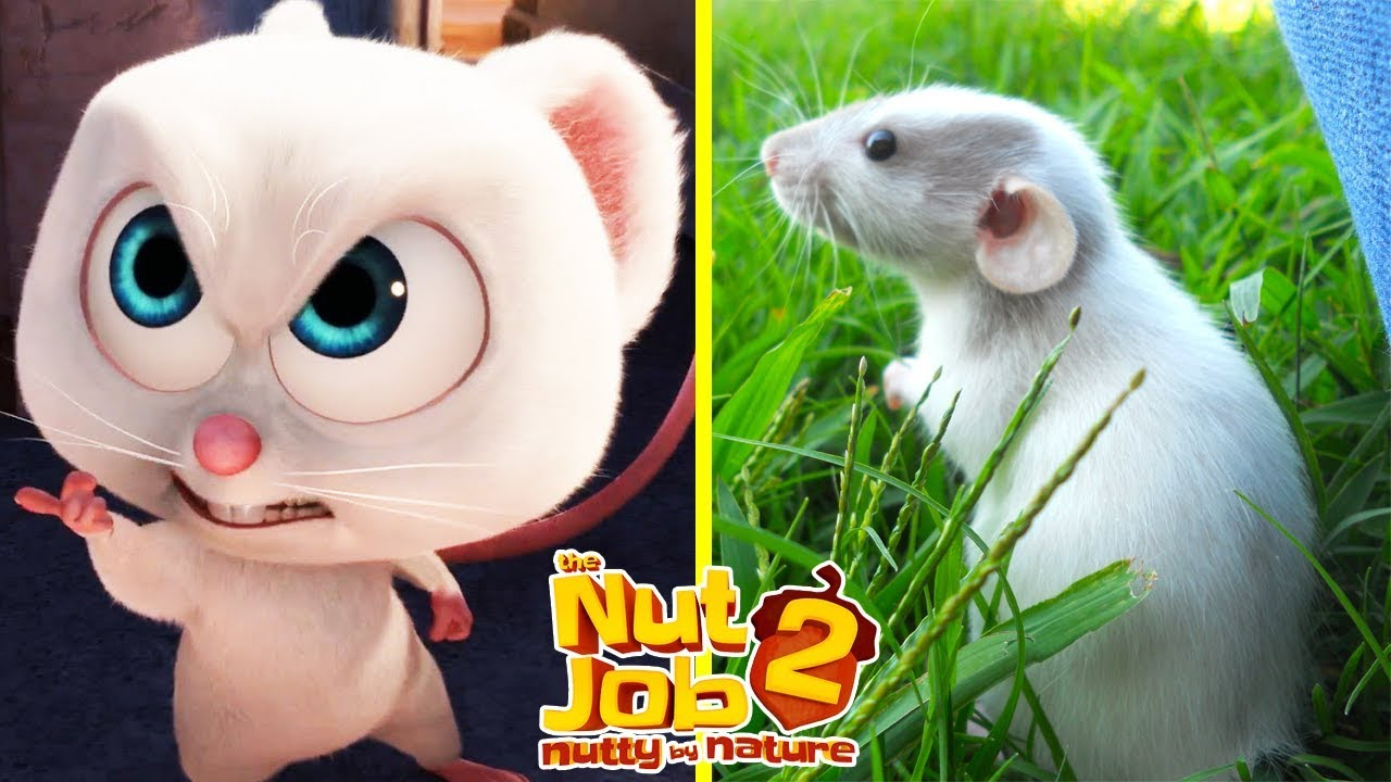 Download The Nut Job 2 Characters In Real Life | All Characters 2017