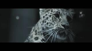 Rammstein - Ich Will (Instrumental)