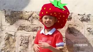 Strawberry Sunday | 9 News Perth