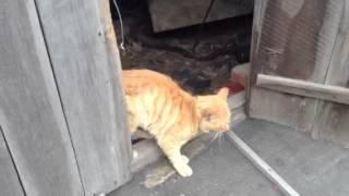 Очень голодные истощённые коты найдены на затоплен