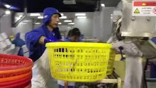 해룡상사 중국 공장 꽃게 작업