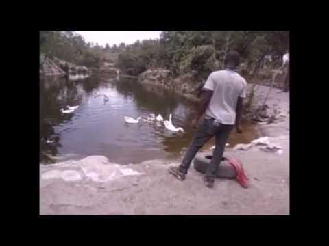 Integrated fish-geese culture in Tanzania