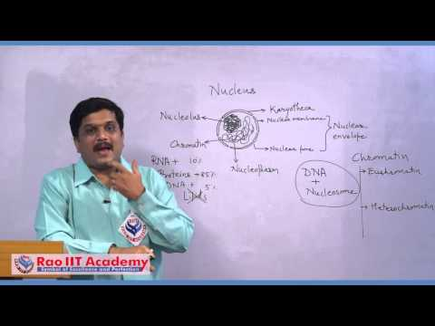 Ribosomes and Nucleus - NEET AIPMT AIIMS Botany Video Lecture [RAO IIT ACADEMY]