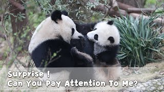 Surprise! Can You Pay Attention To Me? | iPanda