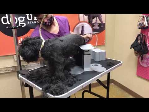 Grooming 3 Dogs 🐕 At Once