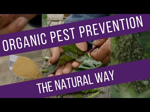 Pest prevention - reduce damage on different vegetables, through understanding the pests