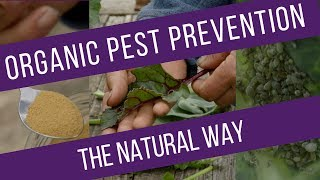 Ways to reduce pest damage on different vegetables, through understanding the pests