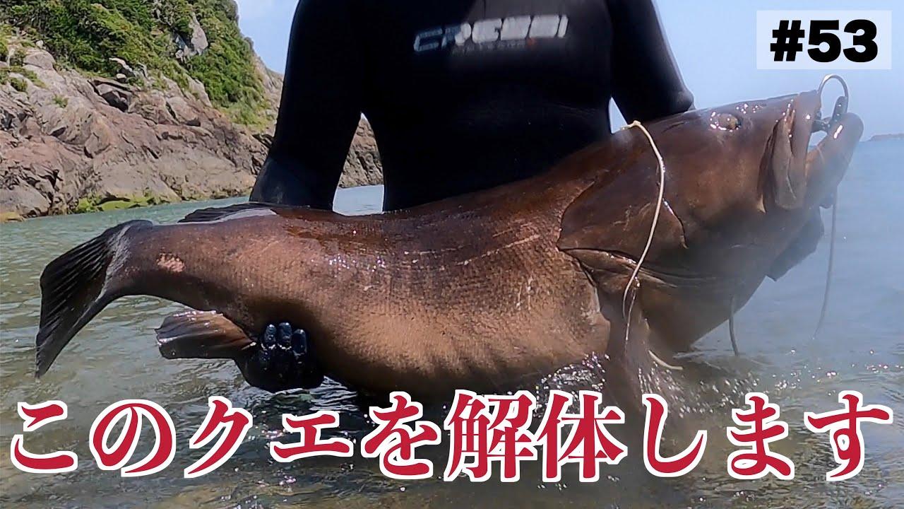 【素潜り】30kg超えの巨大高級魚を解体してみたら…