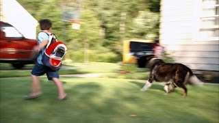 Channel Your Dog's Natural Insticts To Herd Kids Into A Car