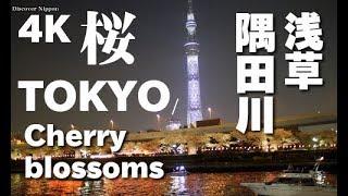撮影:March 2018 東京スカイツリーも見える浅草の隅田川の桜は、江戸享...