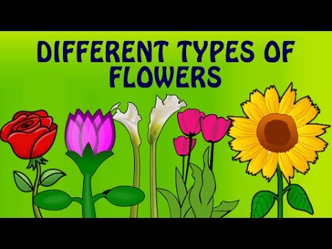 Learn English Flower Names With Pictures Different Types Of