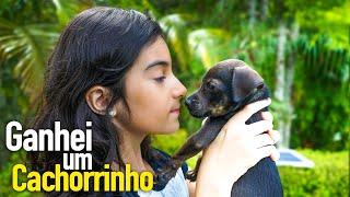 Ganhei um cachorrinho 🐶 Primeiro Banho - Yasmin Verissimo