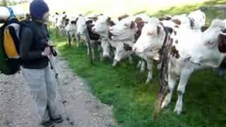 Héloïse et les vaches du Jura