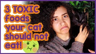 3 Cat Killer Foods! Toxic foods cats should avoid at all costs!