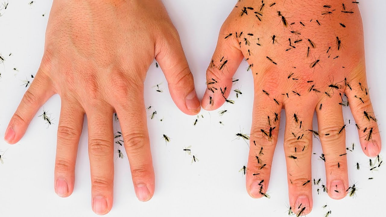 8 All-Natural Ways to Keep Mosquitoes Away