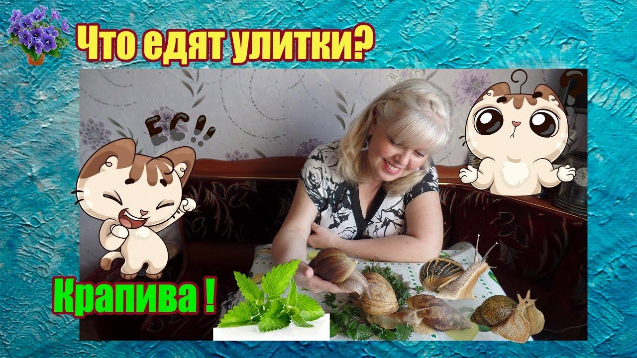 Что ест улитка ахатина в домашних условиях 68