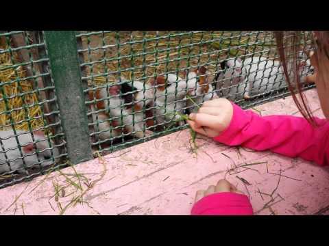 Il lago parco zoo 2015