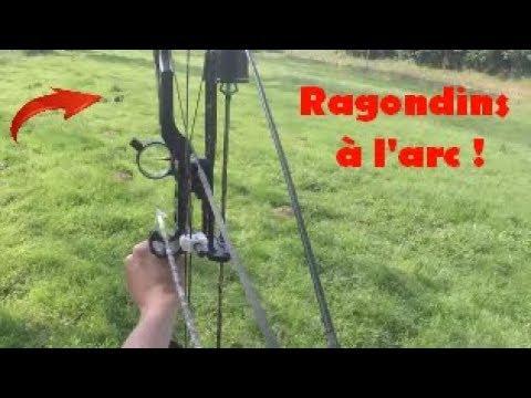 Chasse Du Ragondin à L'arc (coumpound) | Fishing Chasse 53
