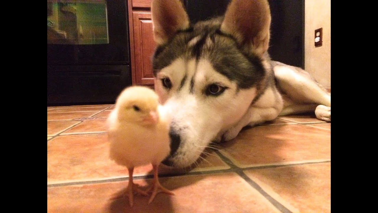 Duck And Dog Best Friends