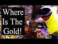 HOW TO FIND GOLD NUGGETS.