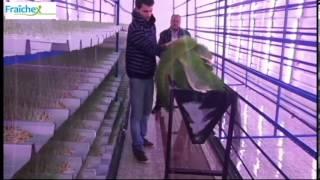 Fraichex Environnement production de fourrage vert 800kg/jour Algerie, Maghnia